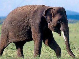 slon india.jpg